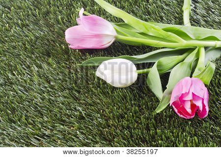 a flower on the grass