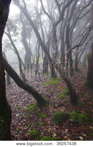 Archaic trees at primeval forest of china