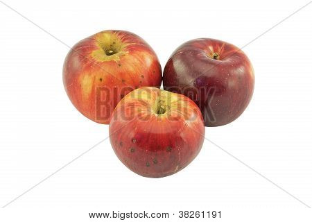 Apples Threesome