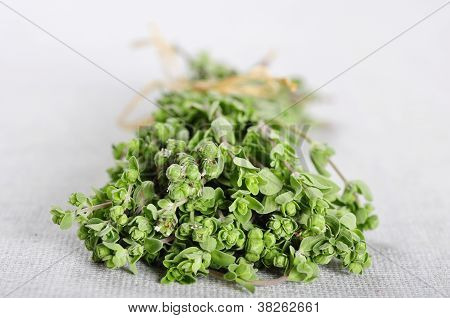 Bunch Of Blooming Marjoram