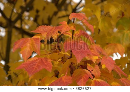 Autumn Leaves And Colors