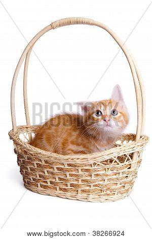 Frightened little kitten  in straw basket.