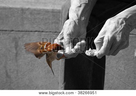 Senior Feeds A Sparrow