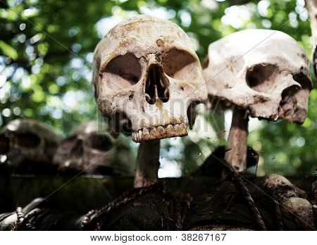 Skeleton Skull Sacrifice Death