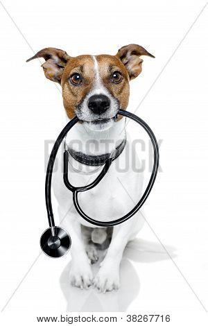 Medical Doctor Dog