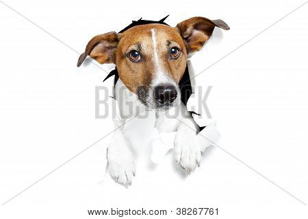 Banner Placeholder Dog