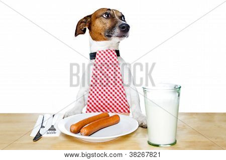 Dinner Meal At Table Dog