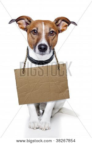 Dog With Empty Cardboard Placeholder