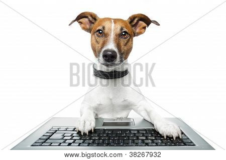 Dog Computer Pc Tablet