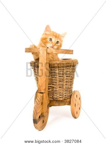 Kitten Sitting On Decorative Tricycle