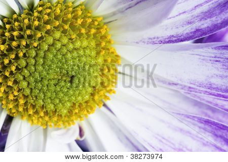 close up shot of pollens of a flower