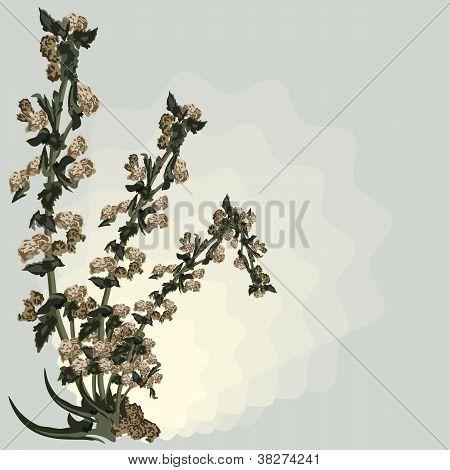 dead sapless plant background