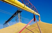 stock photo of auger  - Recently harvested corn pours into large piles at a grain storage facility in western Minnesota - JPG