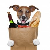 picture of bag-of-dog-food  - grocery bag dog wine tomatoes bread holding it - JPG