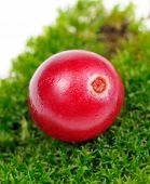 picture of bearberry  - A close - JPG