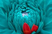Turquoise Fantasy Dahlia And Red Petals Close-up