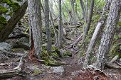 foto of tierra  - Inside a forest at Tierra del Fuego national park Argentina - JPG