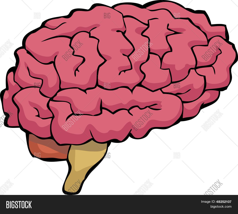 Vector y foto Cerebro De Dibujos Animados  Bigstock