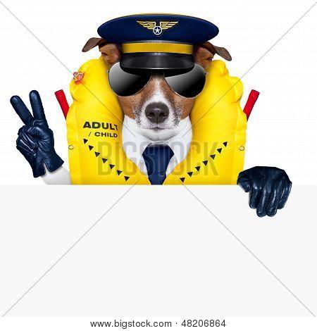 Cão piloto