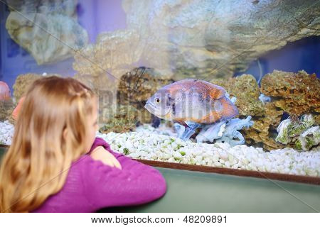 Back  of little girl looking at fish in aquarium. Focus on fish. Shallow depth of field.