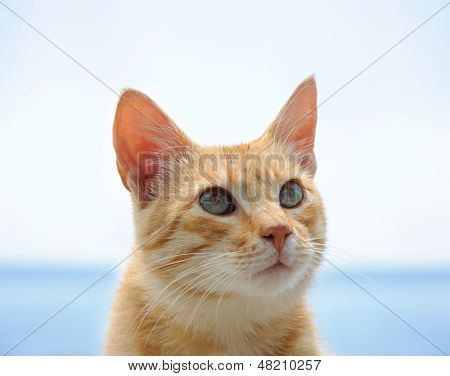 Red Cat With Green Eyes Over Blue