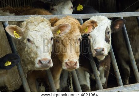 Mixed Herd