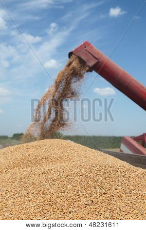 Agriculture, Wheat Harvest
