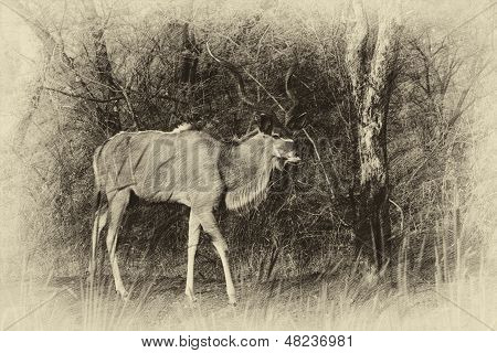 Sepia Walking Kudu Bull Vintage Artwork