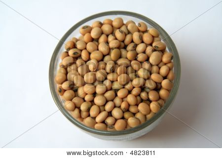 Soya Bean Grains