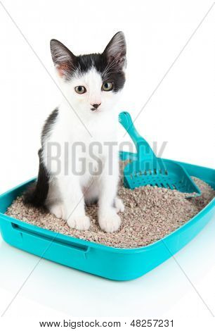 Small kitten in blue plastic litter cat isolated on white