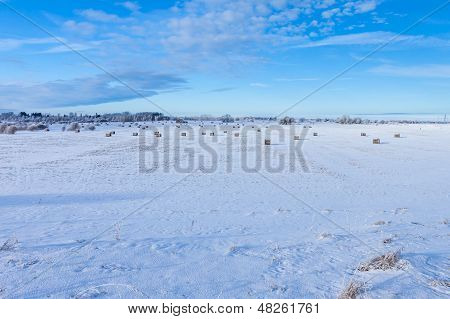 Winter Farmland Scenery