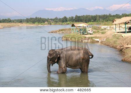Elefante de Chitwan - Nepal