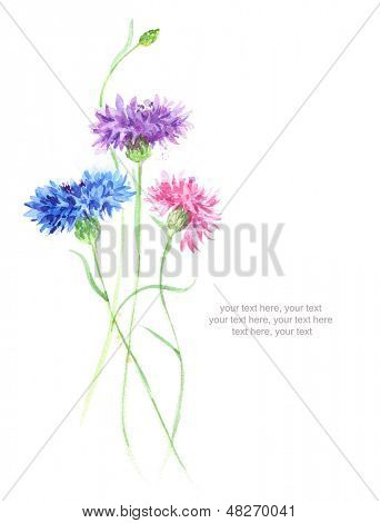 Watercolor card with cornflowers