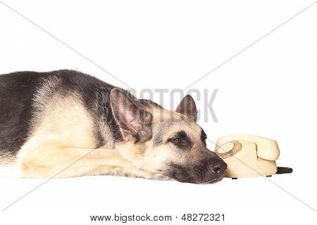 Sad Dog Near The Phone