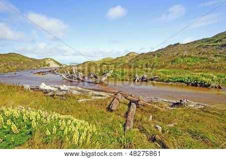 Grasses And Stream Through Sand Dunes