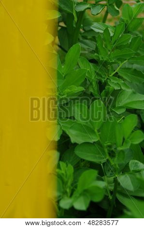 Yellow Post Green plants