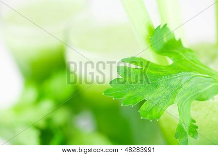 Celery And Three Glasses With Celery Juice Isolated On White