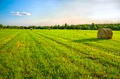 picture of haystacks  - summer rural landscape with a field and hay  - JPG