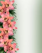 image of easter lily  - Image and illustration composition of pink lilies for wedding birthday Easter party invitation with copy space - JPG