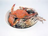 pic of cooked blue crab  - photo of a cooked blue crabs in a bowl from the Chesapeake Bay of Maryland - JPG