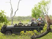 image of cheetah  - Side view of tourists in jeep looking at cheetah lying on log - JPG
