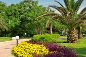 stock photo of swales  - Tropical palm trees in a beautiful park - JPG