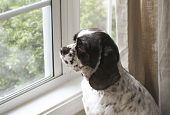 stock photo of cute dog  - Waiting  - JPG