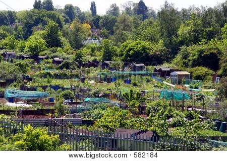 English Allotment