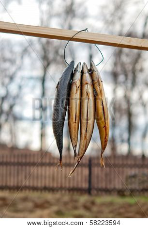 Stockfish Outdoor Drying