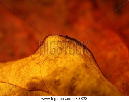 Hoja roja en otoño