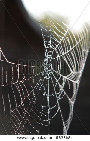 Morning Dew On Spider Web Beauty Close-up Pattern