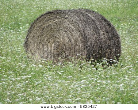 Rolled Bale of Aging Hay Surrounded By White Wildflowers