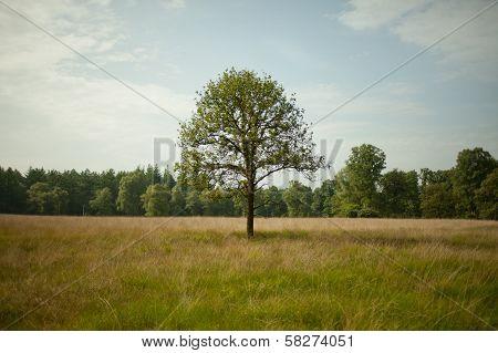 Singe tree in a field