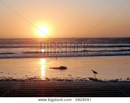 Vogel stand im Wasser während ein Sonnenuntergang